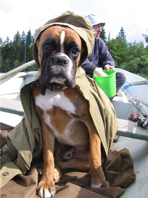 ты собачка а я рыбак